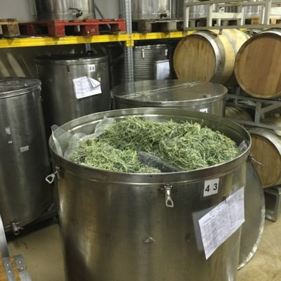 distillazioneGenepy